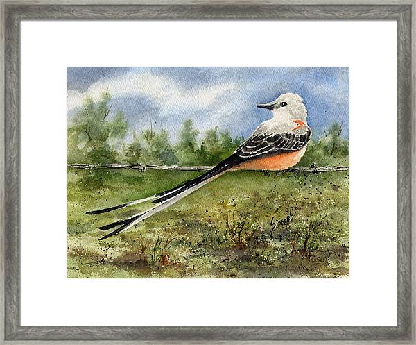 Scissor-tail Flycatcher Framed Print
