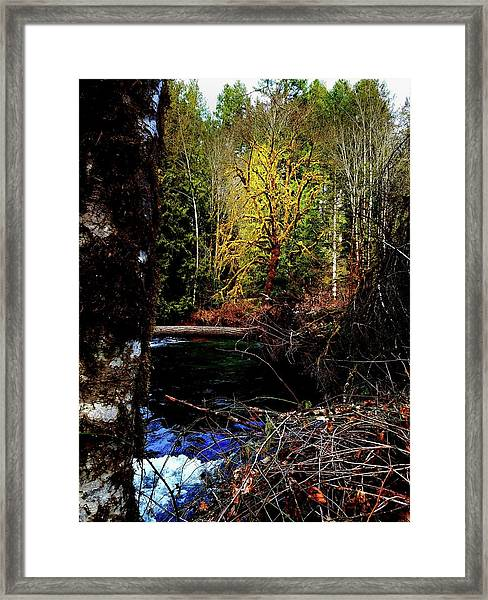 Scoggins Creek 3 Framed Print