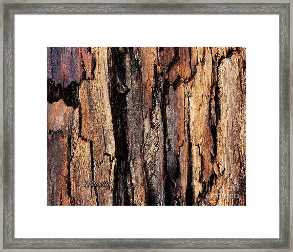 Scorched Timber Framed Print