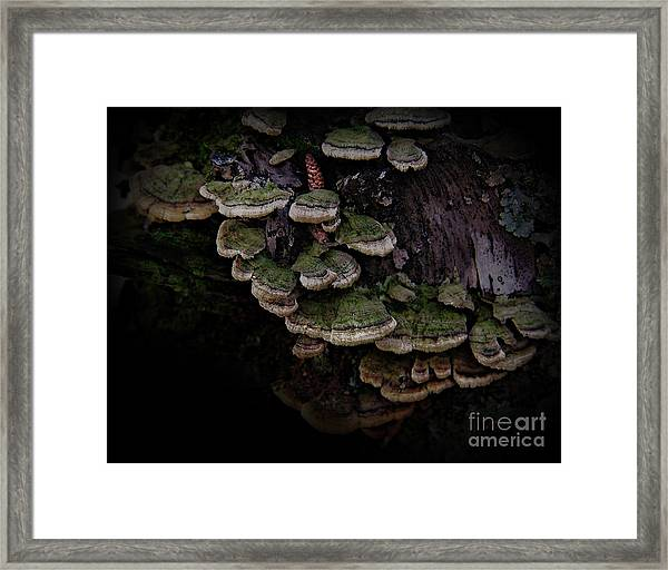 Scotopic Vision 1 - Pinecone Framed Print