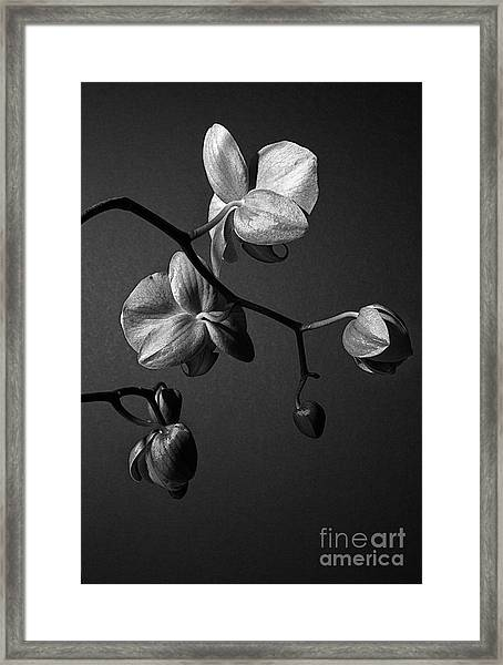 Scotopic Vision 3 - Orchid Framed Print