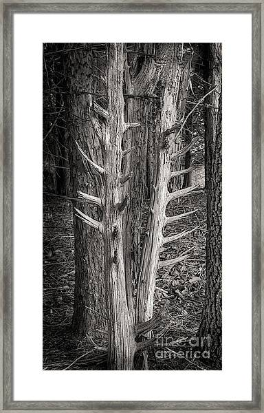 Scotopic Vision 4 - Trees Framed Print