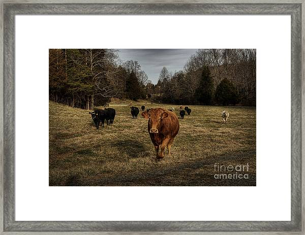 Scotopic Vision 9 - Cows Come Home Framed Print