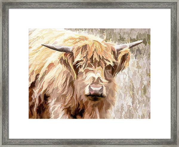 Scottish Highland Cow Framed Print