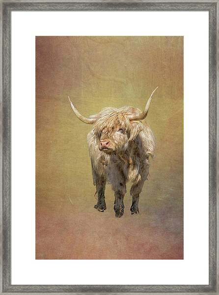 Scottish Highlander Framed Print