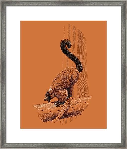 Screaming Lemur Framed Print