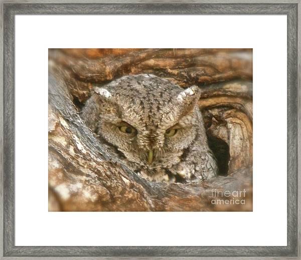 Screech Owl On Spring Creek Framed Print