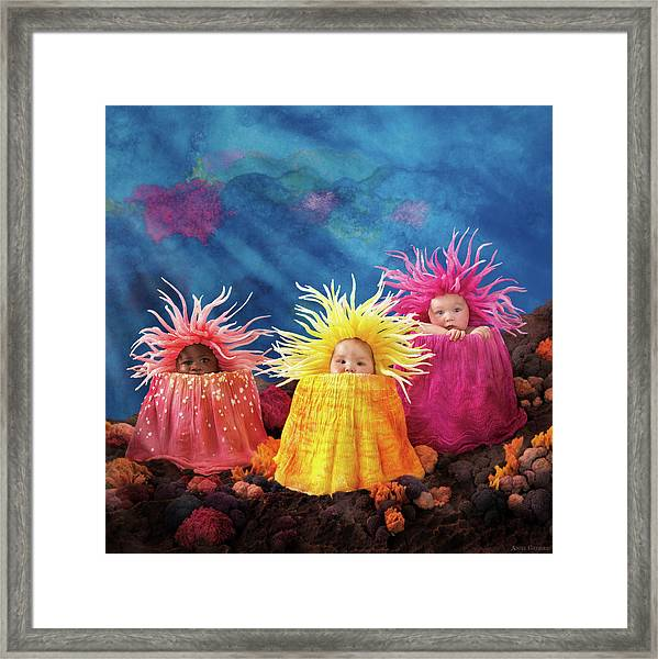 Sea Anemones  Framed Print by Anne Geddes
