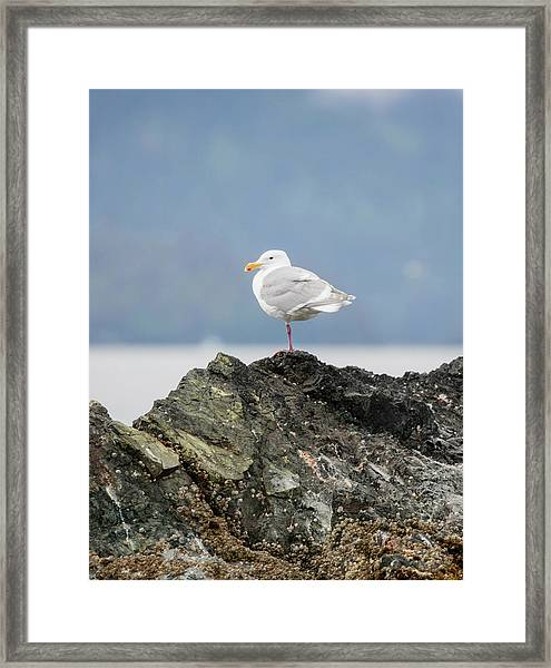 Sea Bird Perched On A Rock Framed Print