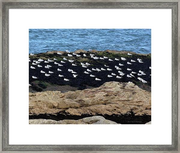 Sea Birds At Rest Framed Print