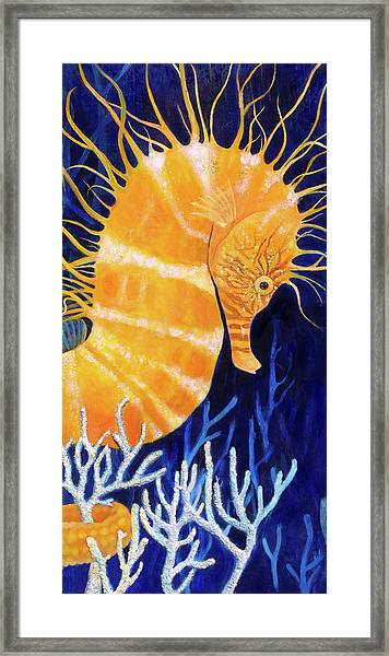 Sea Biscuit Framed Print by Samantha Lockwood