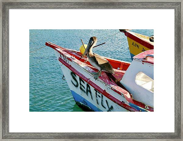 Sea Fly 1, Aruba Framed Print