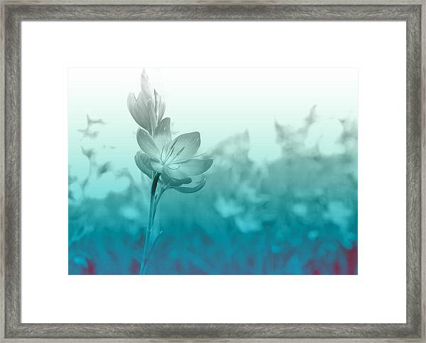 Sea Green Haze Framed Print