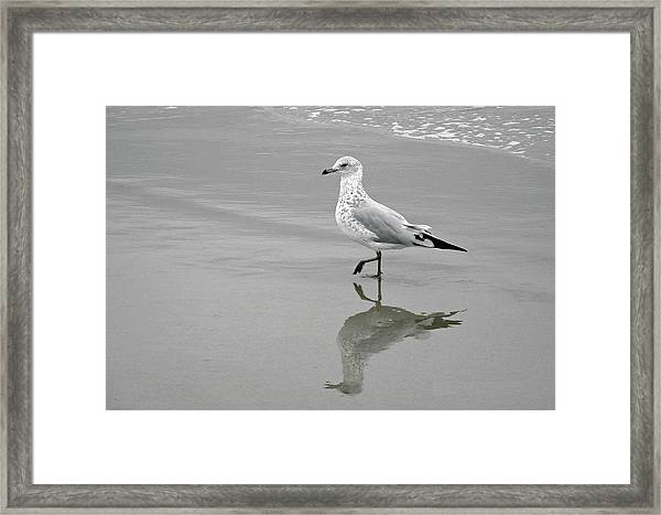 Sea Gull Walking In Surf Framed Print