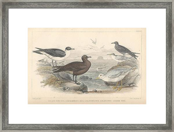 Sea Gulls Framed Print