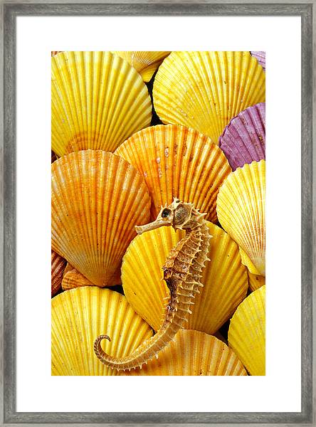 Sea Horse And Sea Shells Framed Print