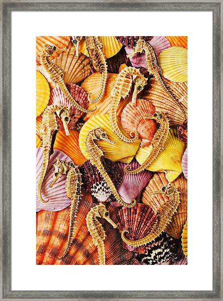 Sea Horses And Sea Shells Framed Print