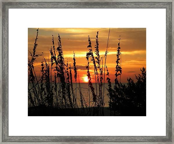 Sea Oats In The Sun Framed Print