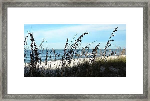 Sea Oats Protecting The Beach Framed Print