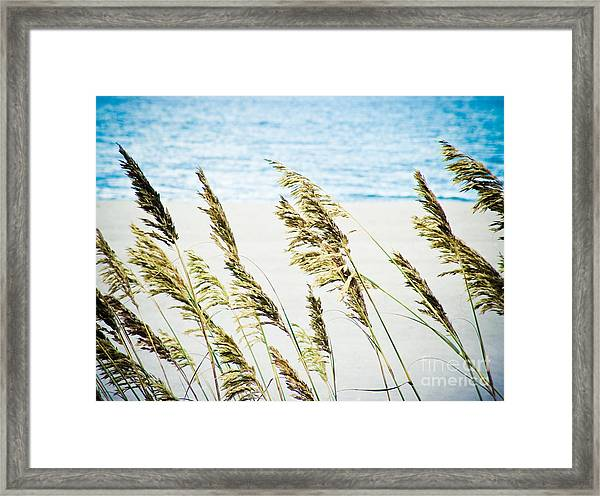 Sea Oats Framed Print by Tonya Laker