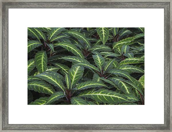 Sea Of Leaves Framed Print