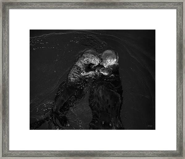 Sea Otters II Bw Framed Print