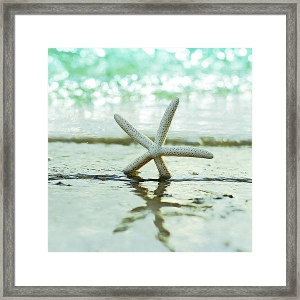 Sea Star Framed Print