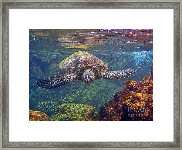 Sea Turtle - Close Up Framed Print
