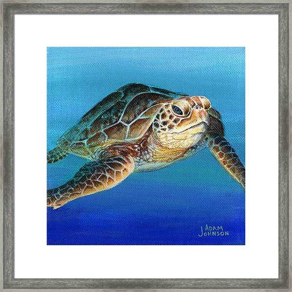 Sea Turtle 1 Of 3 Framed Print