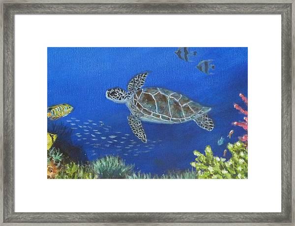 Sea Turtle 2 Framed Print