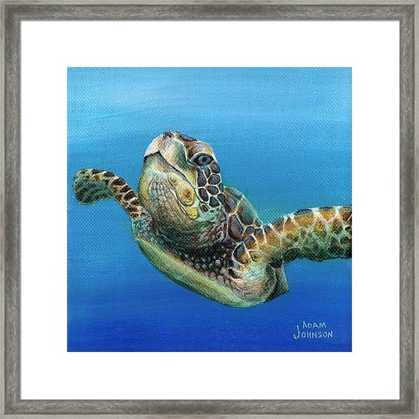 Sea Turtle 3 Of 3 Framed Print
