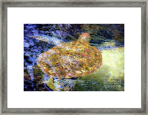 Sea Turtle In Hawaii Framed Print