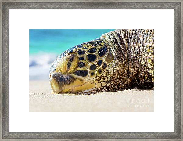 Sea Turtle Resting At The Beach Framed Print