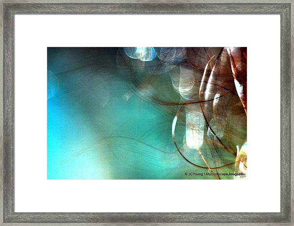 Sea World Framed Print by JCYoung MacroXscape