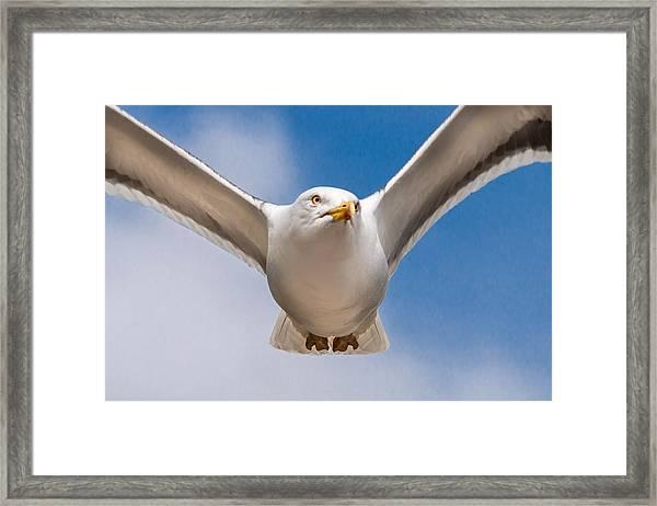 Seabird Closeup Framed Print