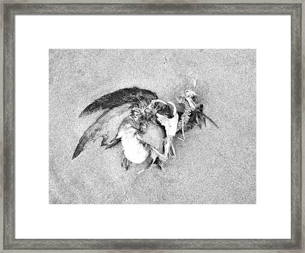 Seabird Fatalities-1 Framed Print