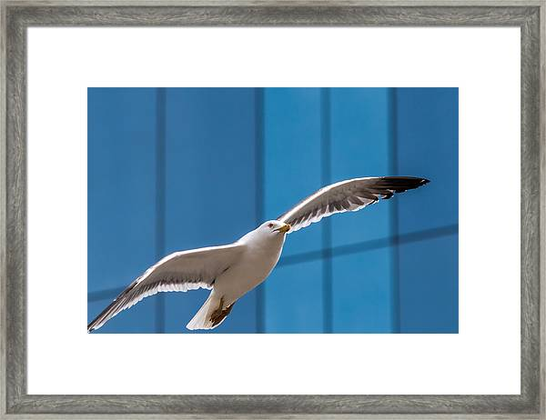 Seabird Flying On The Glass Building Background Framed Print
