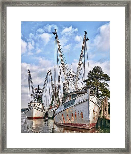 Seafood Searchers Framed Print