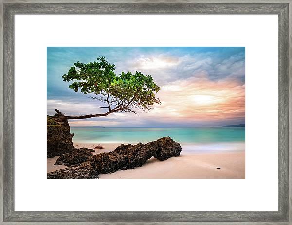 Seagrape Tree Framed Print