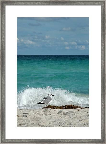 Seagull - South Beach Miami Framed Print