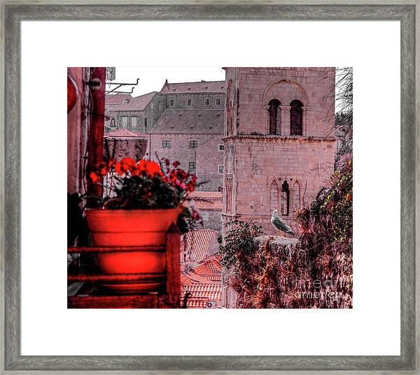 Seagull Admiring The View Framed Print