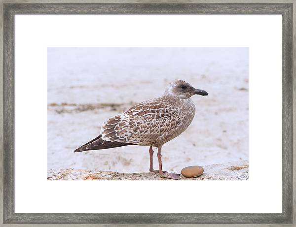 Framed Print featuring the photograph Seagull And His Rock by Dee Browning