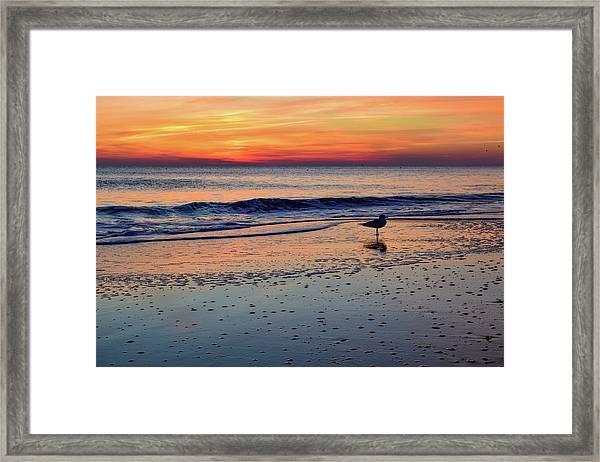 Seagull At Sunrise Framed Print