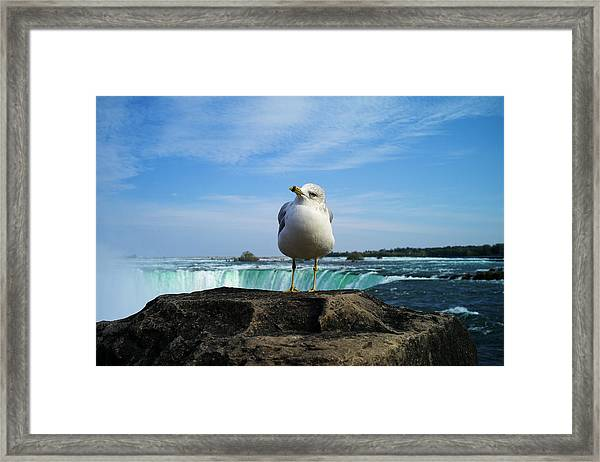 Seagull Checking Out The Photographers Framed Print