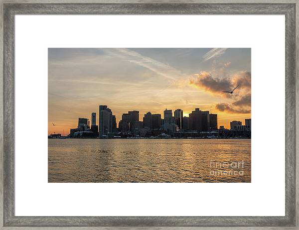 Seagull Flying At Sunset With The Skyline Of Boston On The Backg Framed Print