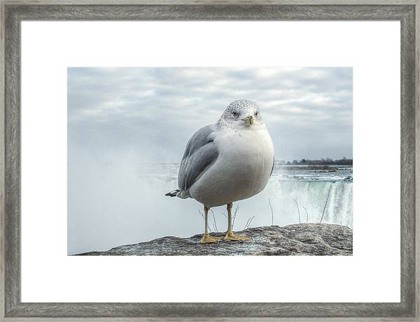 Framed Print featuring the photograph Seagull Model by Garvin Hunter