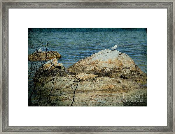 Seagull On A Rock Framed Print