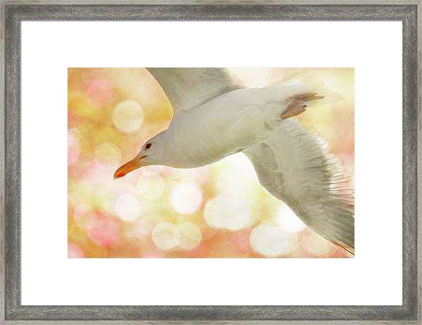 Seagull On Pink And Yellow Sky Framed Print