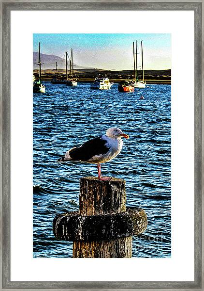 Seagull Perch Framed Print