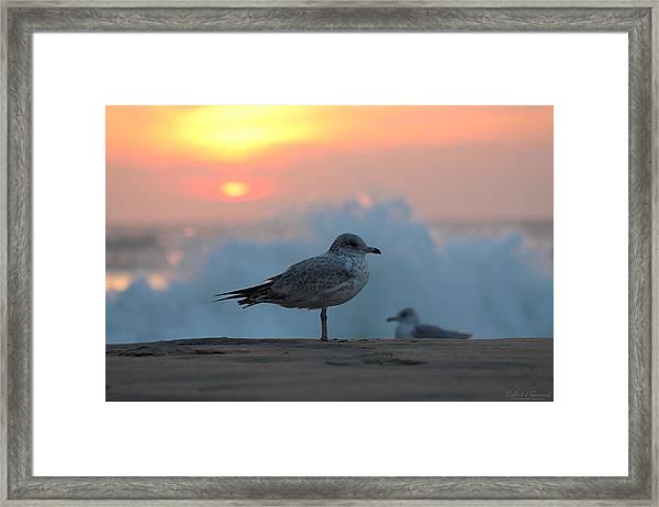 Seagull Seascape Sunrise Framed Print